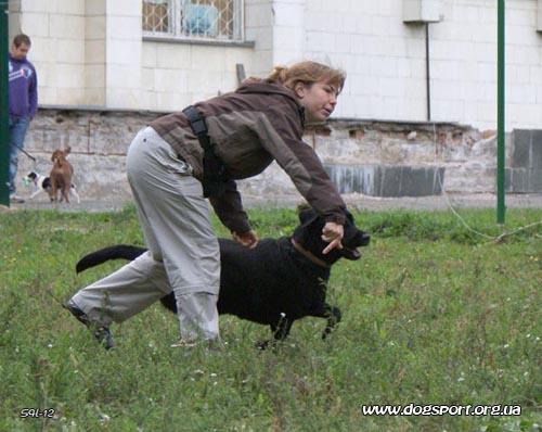 Міський собака