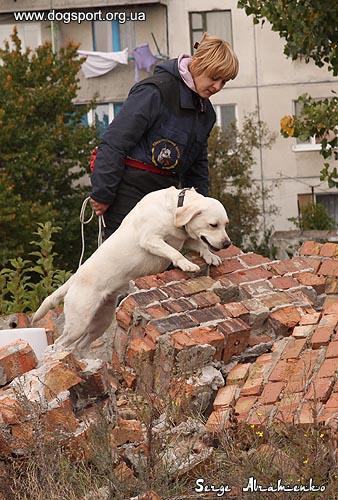 Собаки-рятувальники